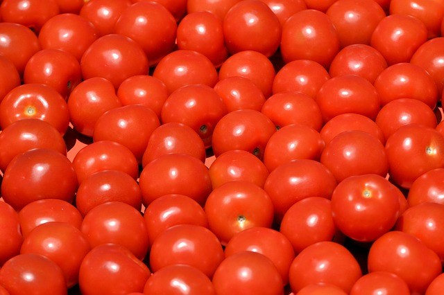 tomato business In Nigeria